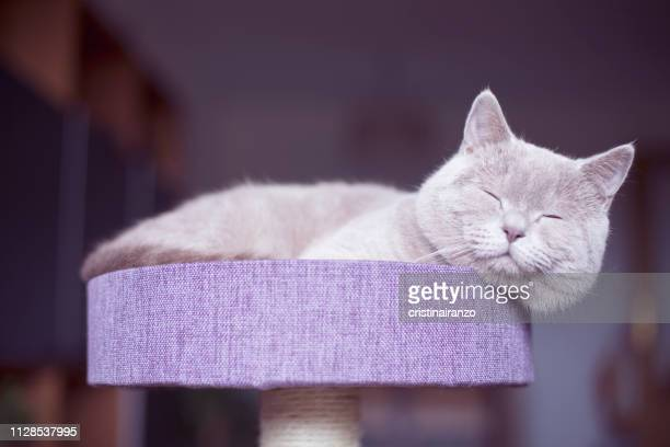 cat sleeping - pet adoption stock pictures, royalty-free photos & images