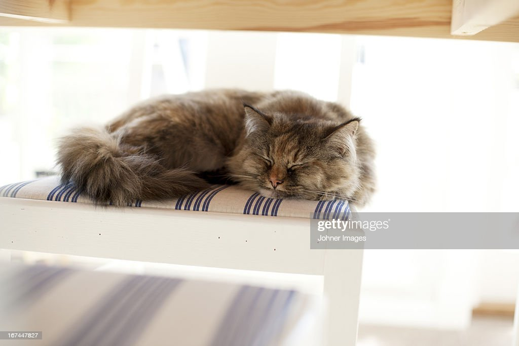 Cat sleeping : Stock Photo