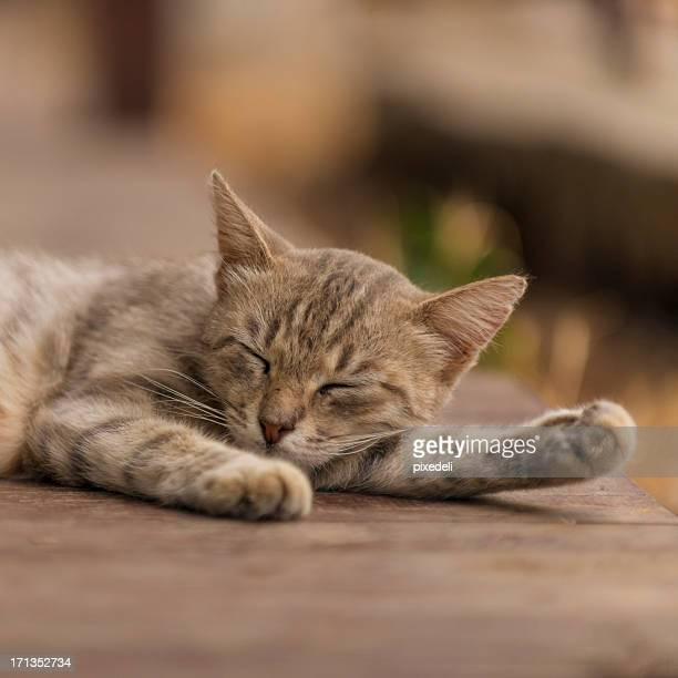 Chat dormir