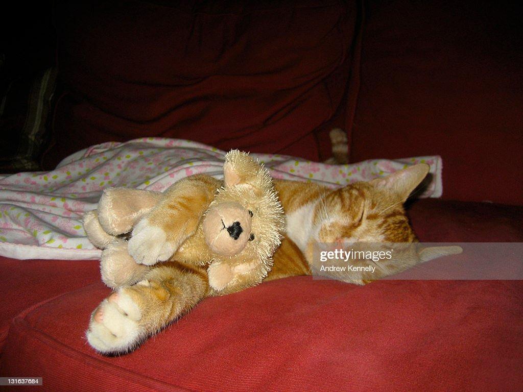 Cat sleeping with stuffed animal of dog : ストックフォト
