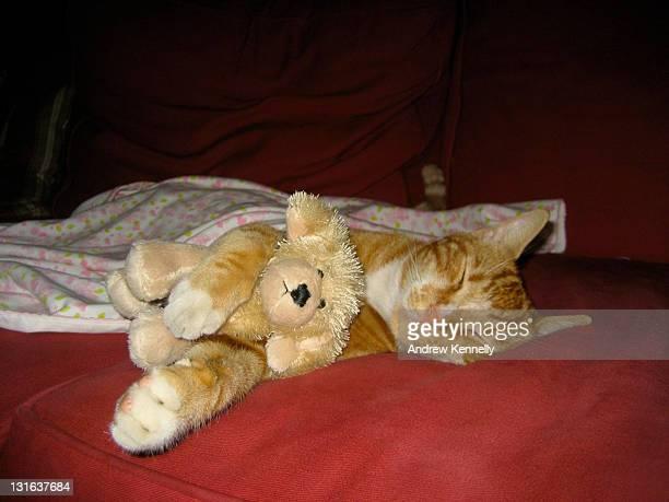 cat sleeping with stuffed animal of dog - パサデナ市 ストックフォトと画像