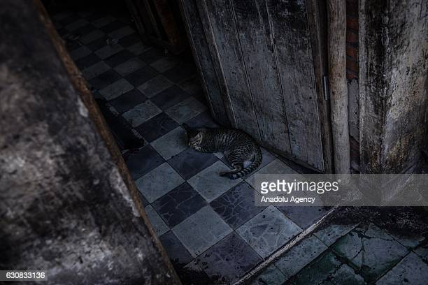 A cat sleeps at the entrance of one of the squatted apartments during a protest at the Borei Keila site in Phnom Penh Cambodia on January 3 2017...