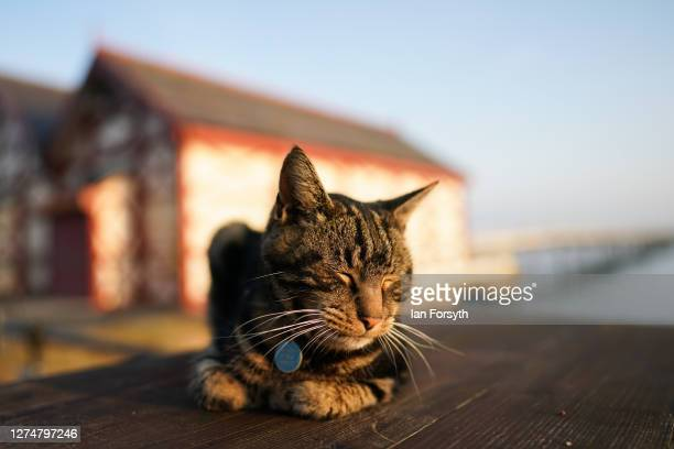 Cat sleeps in the morning sunshine on the first day of Autumn at Saltburn beach on September 22, 2020 in Saltburn By The Sea, England. The autumnal...