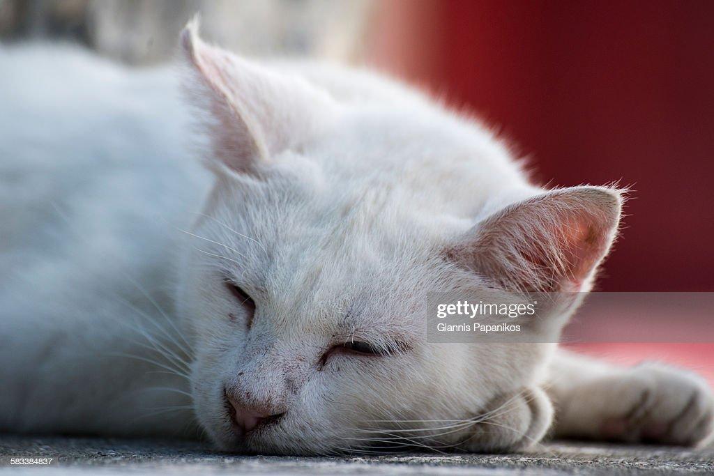 A cat sleeps : Stock Photo