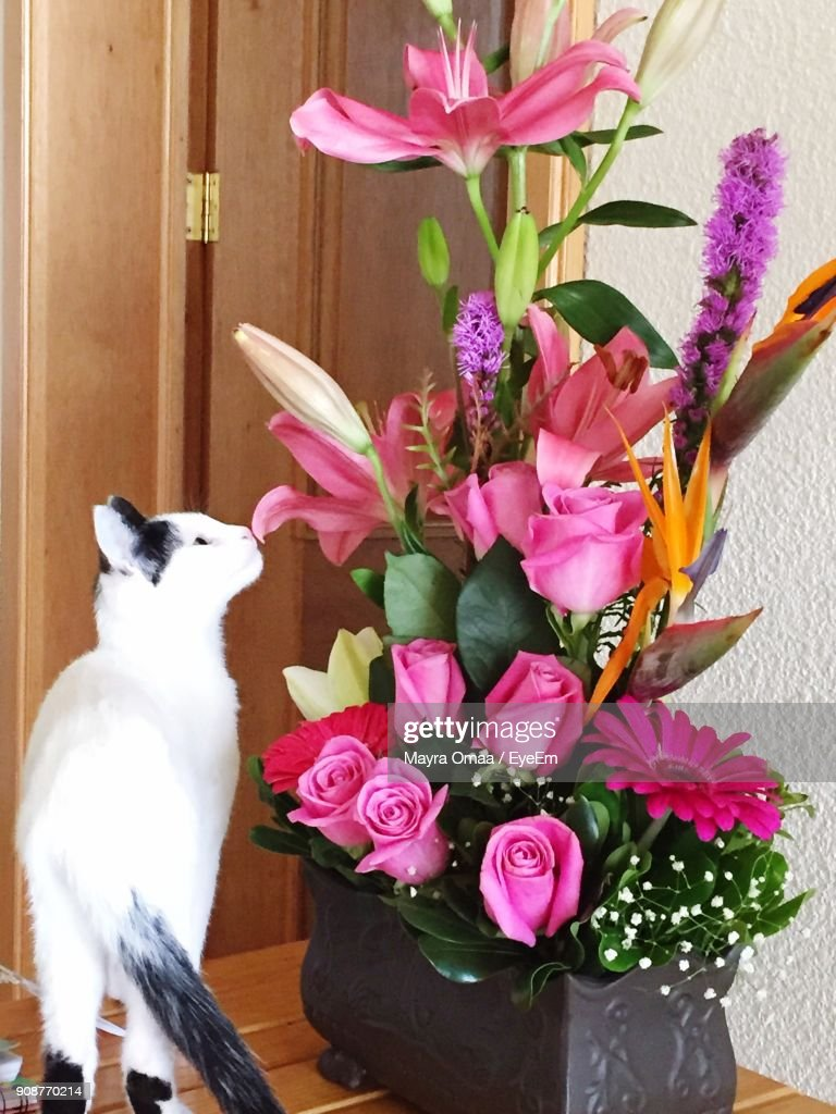 Cat Smelling Flowers In Vase Stock Photo | Getty Images