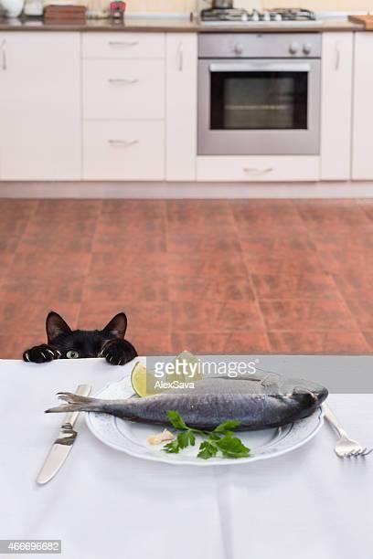 Porter au quotidien de chat sur la table pour prendre le poisson