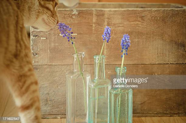 Cat sniffing flowers in bottles