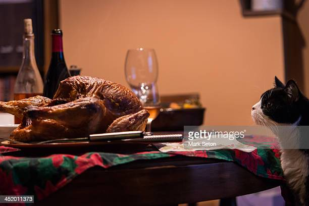 cat sniffs for a slice roast turkey