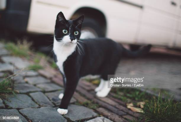 cat standing outdoors - cristian neri foto e immagini stock