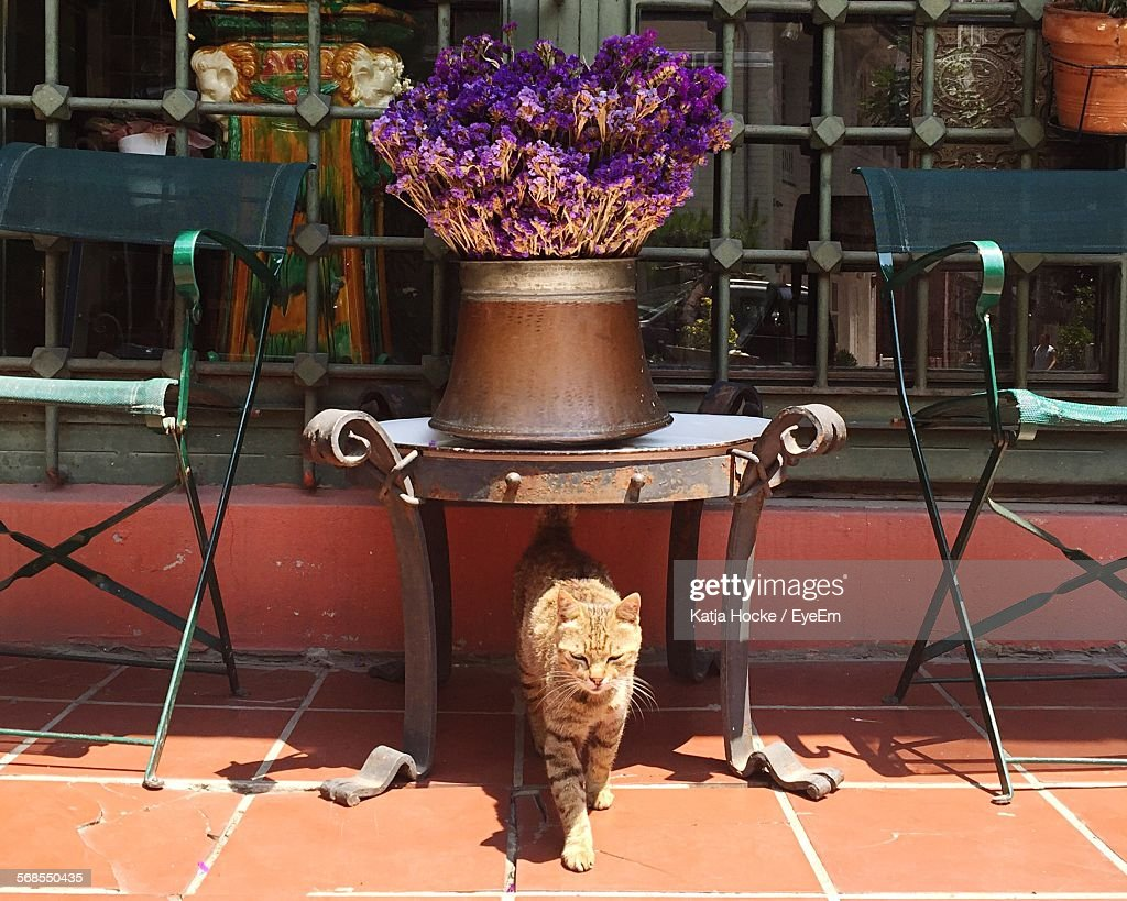 Cat Standing Under Table On Floor : Stock Photo