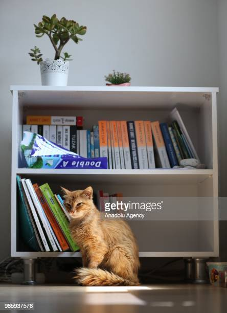 A cat stands inside an office at Esenkoy Town Municipality at Cinarcik district of Yalova province in Turkey on June 27 2018 Municipal officials and...