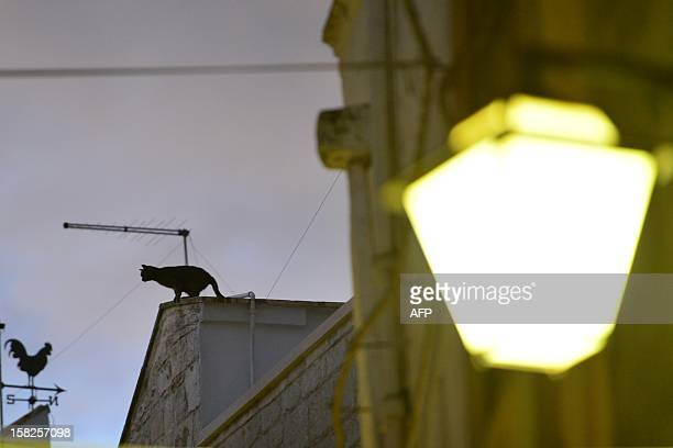 A cat stands on a roof in a street of Cisternino in the southern Italian region of Puglia on December 11 2012 Cisternino is one of the few places on...