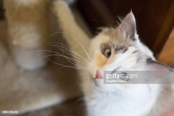 Cat Stares