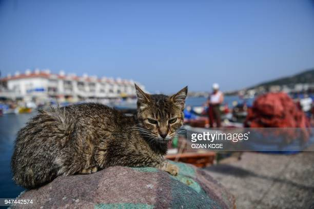 A cat stays on fishing nets on a port on April 17 2018 during a sunny day at Foca in Izmir western Turkey / AFP PHOTO / OZAN KOSE