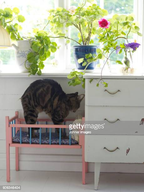Cat stretching in small cot