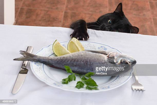 Cat stretching its paw on the table to steal food