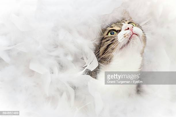 Cat Surrounded In Feathers