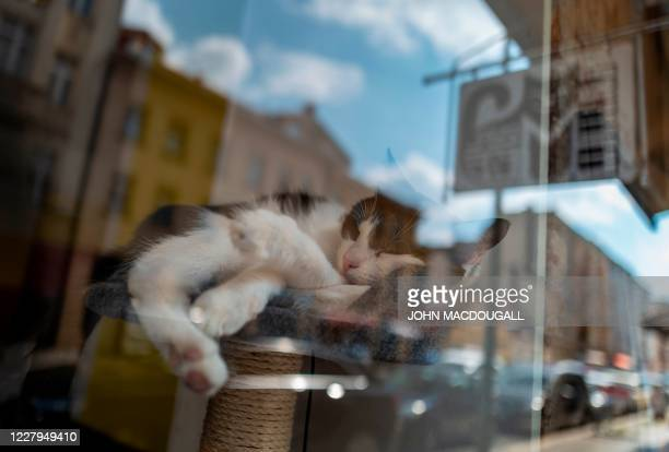 """Cat takes a nap in the window of a so-called """"Cat Cafe"""" in Berlin on August 7, 2020. - International Cat Day, or World Cat Day, created in 2002 by..."""