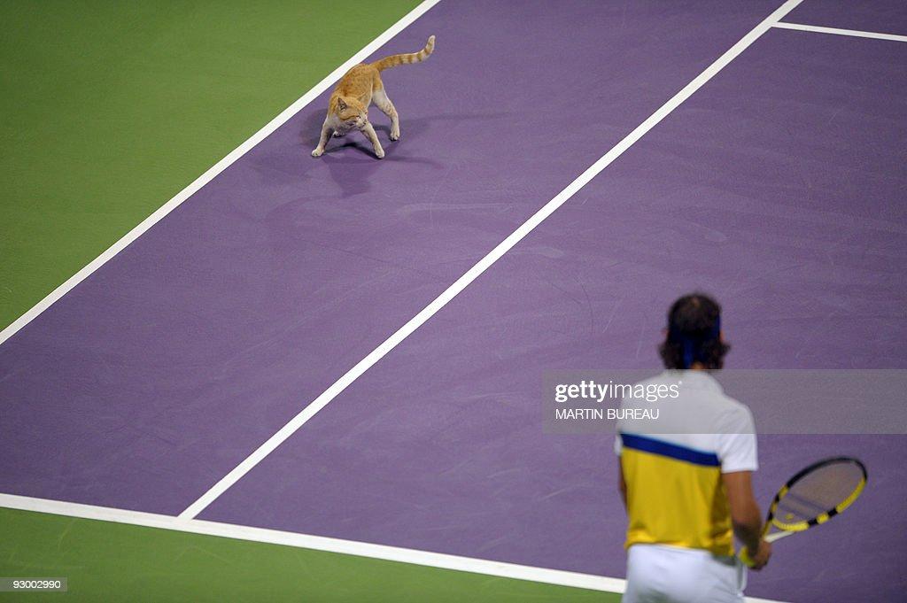 A cat that has wandered onto the court f : Fotografía de noticias