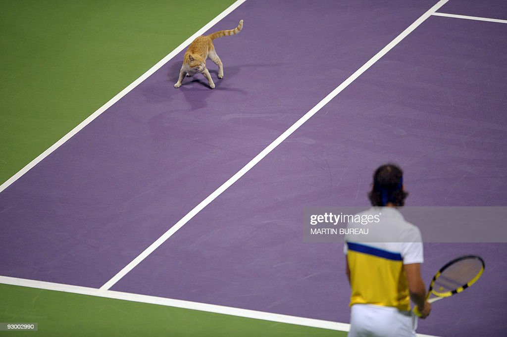 A cat that has wandered onto the court faces Spanish player Rafael Nadal as he plays with Spanish Marc Lopez during the Qatar Open 2009doubles tennis final against Canadian Daniel Nestor and Serb Nenad Zimonjic in Doha on January 9, 2009. Nadal and Lopez won 6-4, 4-6, 8-10.