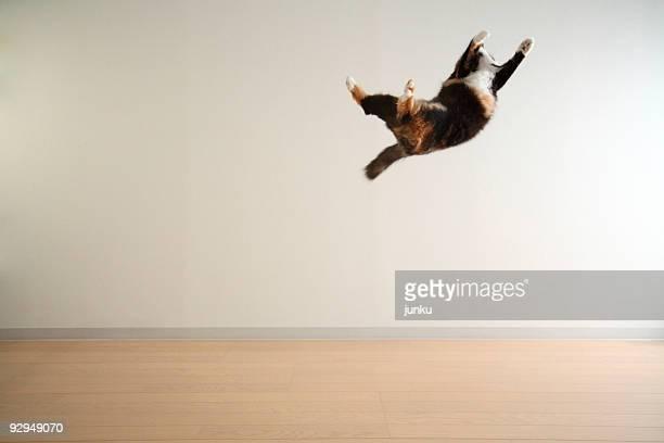 cat tossed in the air - 一匹 ストックフォトと画像