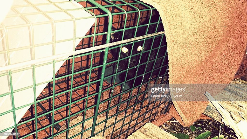 Cat Trapped In Cage : Stock Photo