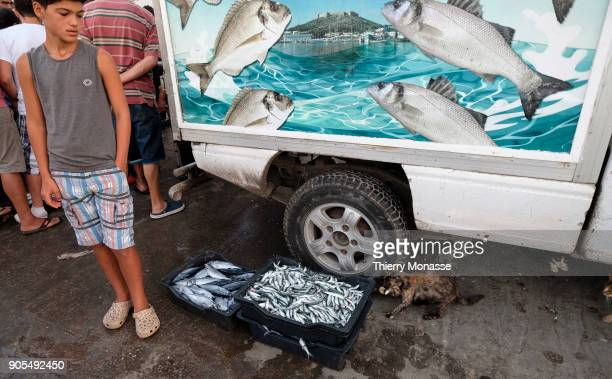 KELIBIA NABEUL TUNISIA AUGUST 23 2018 A cat try to catch European anchovy or albacore at Kelibia's harbor on August 23 2017 Around 15% of the...
