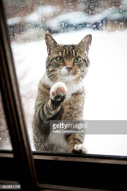 Cat trying to come in out in the rain