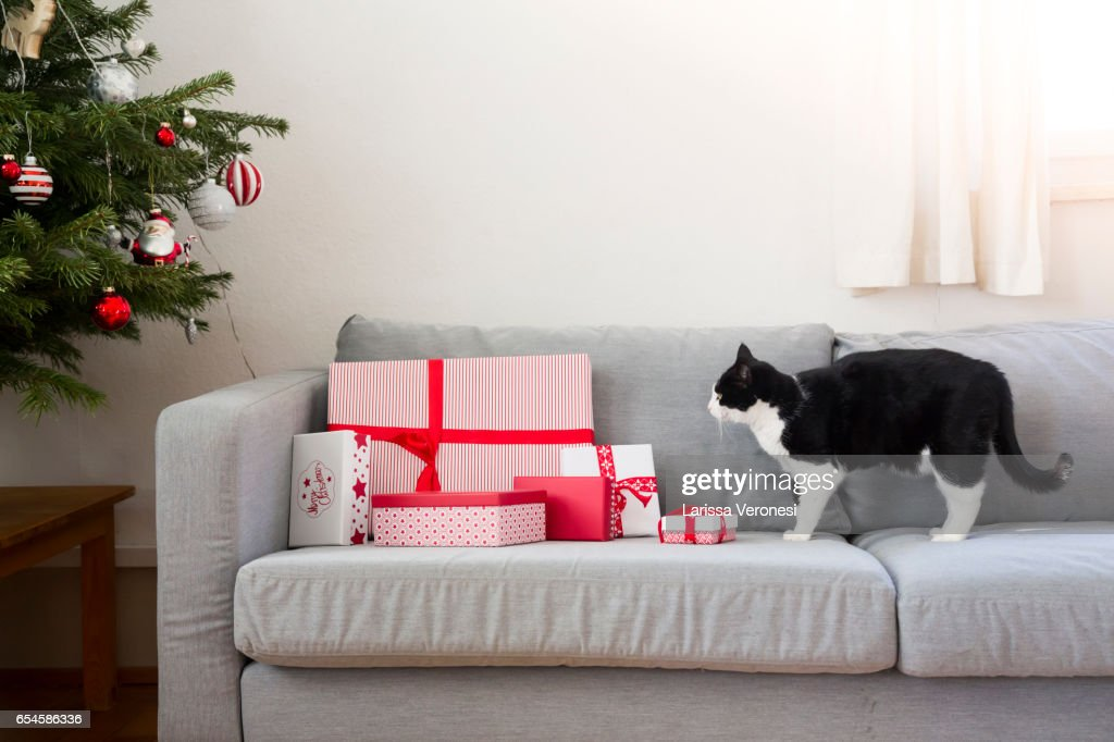 Cat und Christmas presents on a sofa with Christmas tree : Stock-Foto