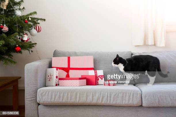 Cat und Christmas presents on a sofa with Christmas tree