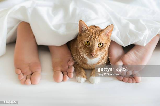 Cat  under bedcovers with couple