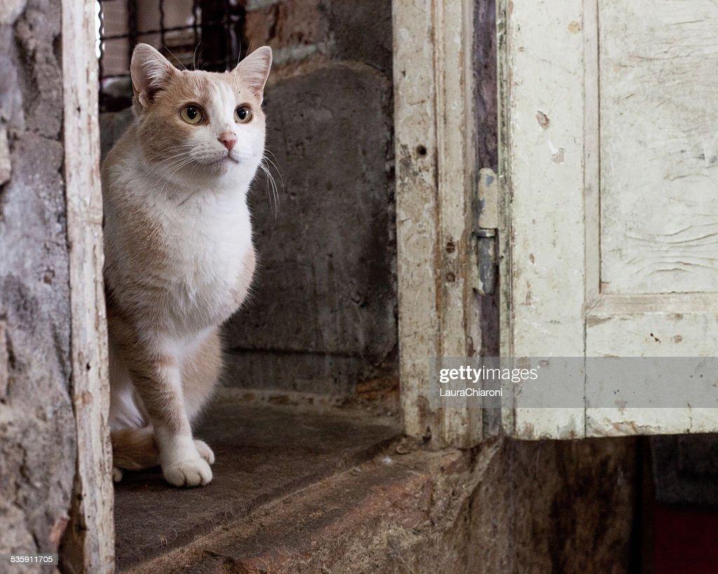 Gato à espera de aprovação : Foto de stock