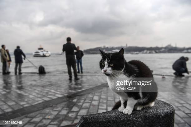 Cat waits for fish as people fish in the Bosphorus river on December 12, 2018 in the Karakoy district in Istanbul.