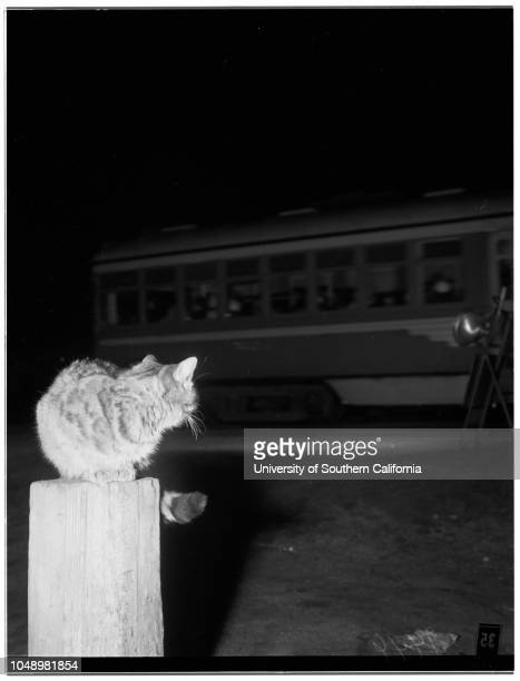 Cat waits for streetcars 04 January 1952 Vineland Avenue and Moorpark Street North HollywoodMr and Mrs Harry Chipman Cat waits and watches...