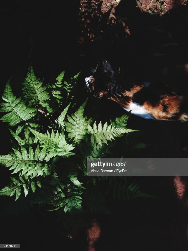 Cat Walking By Plant : Stock Photo
