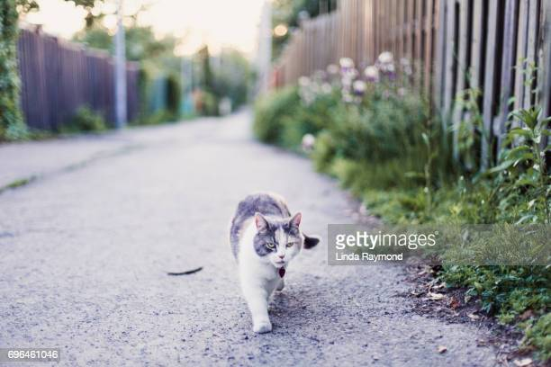 A cat walking in an alley