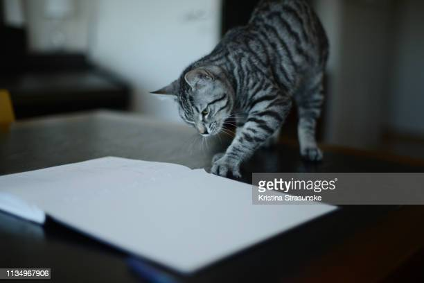 a cat walking on a desk by an open note pad - kristina strasunske stock photos and pictures
