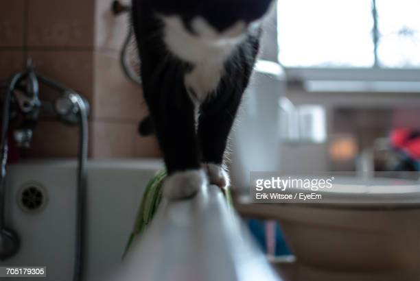 Cat Walking On Bathtub At Home
