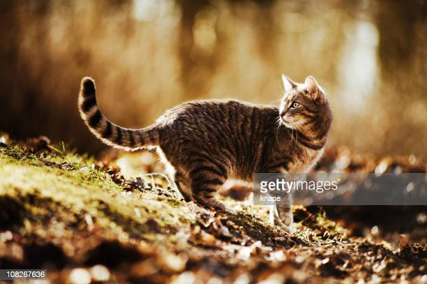 Cat Walking Outside