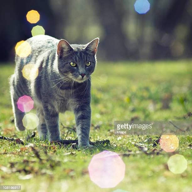 gatto a piedi attraverso erba - soltanto un animale foto e immagini stock