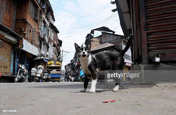 A cat walks down a near deserted street during a strike in Srinagar on July 25 2009 The strike called by the hardline faction of Muslimmajority...