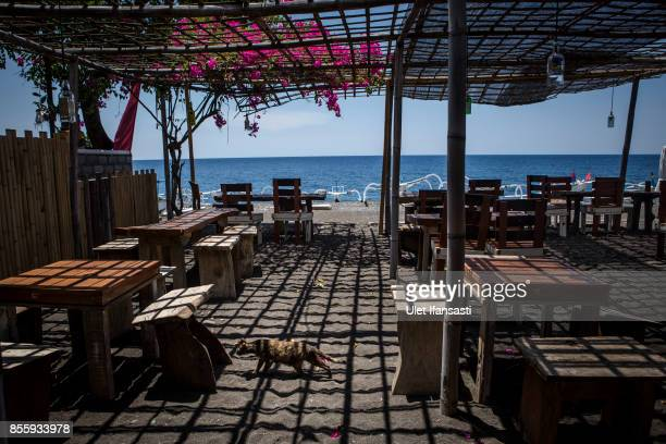 KARANGASEM BALI INDONESIA SEPTEMBER 30 A cat walks in an empty restaurant by the customer at lunch time in Amed beach as emptied of tourists on...