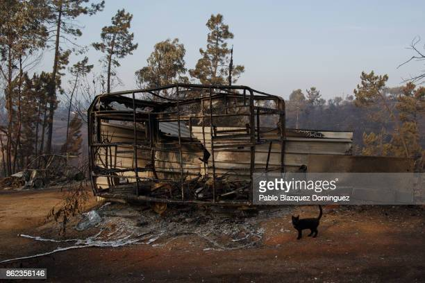 A cat walks past a burnt caravan in the village of Sao Pedro de Alva near Penacova on October 17 2017 in Coimbra region Portugal At least 37 people...