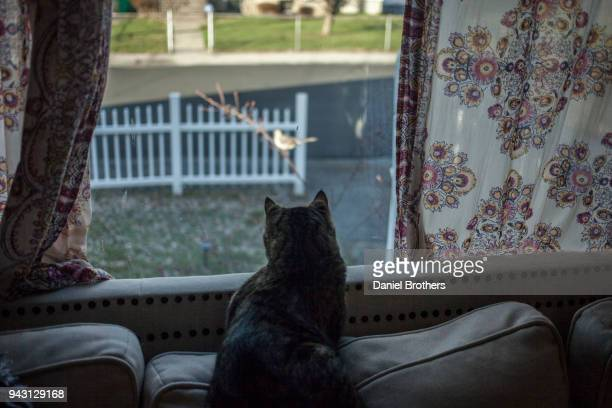 Cat Watches Bird from suburban house