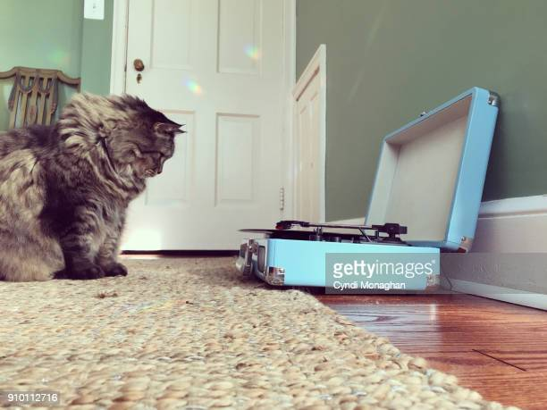 cat watching record player - naughty america stock photos and pictures