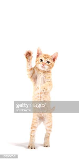 cat waving his paw - waving gesture stock photos and pictures