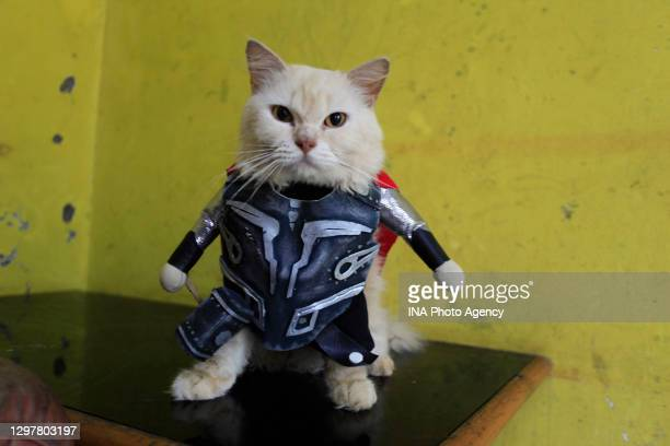 Cat wearing a Thor costume made by cat tailor Fredi Lugina at a workshop in Bogor, West Java, Indonesia, December 6, 2020.