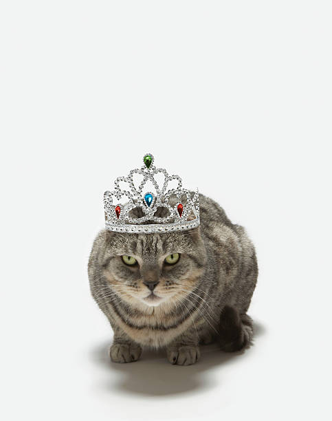 Cat Wearing A Tiara Wall Art