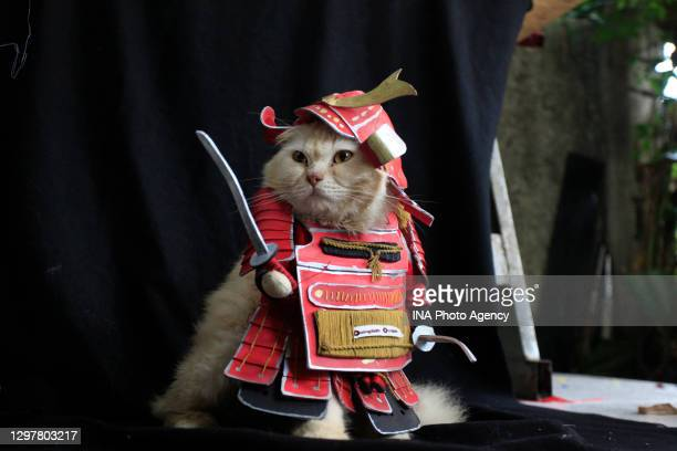 Cat wearing a traditional samurai costume made by cat tailor Fredi Lugina at a workshop in Bogor, West Java, Indonesia, December 6, 2020.