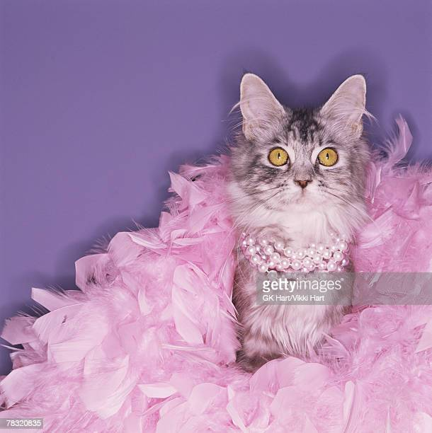 cat wearing boa and pearls - diva human role stock photos and pictures